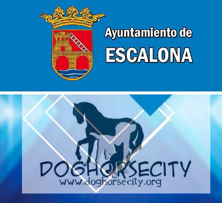 Preocupación por el volumen de perros abandonados en el municipio